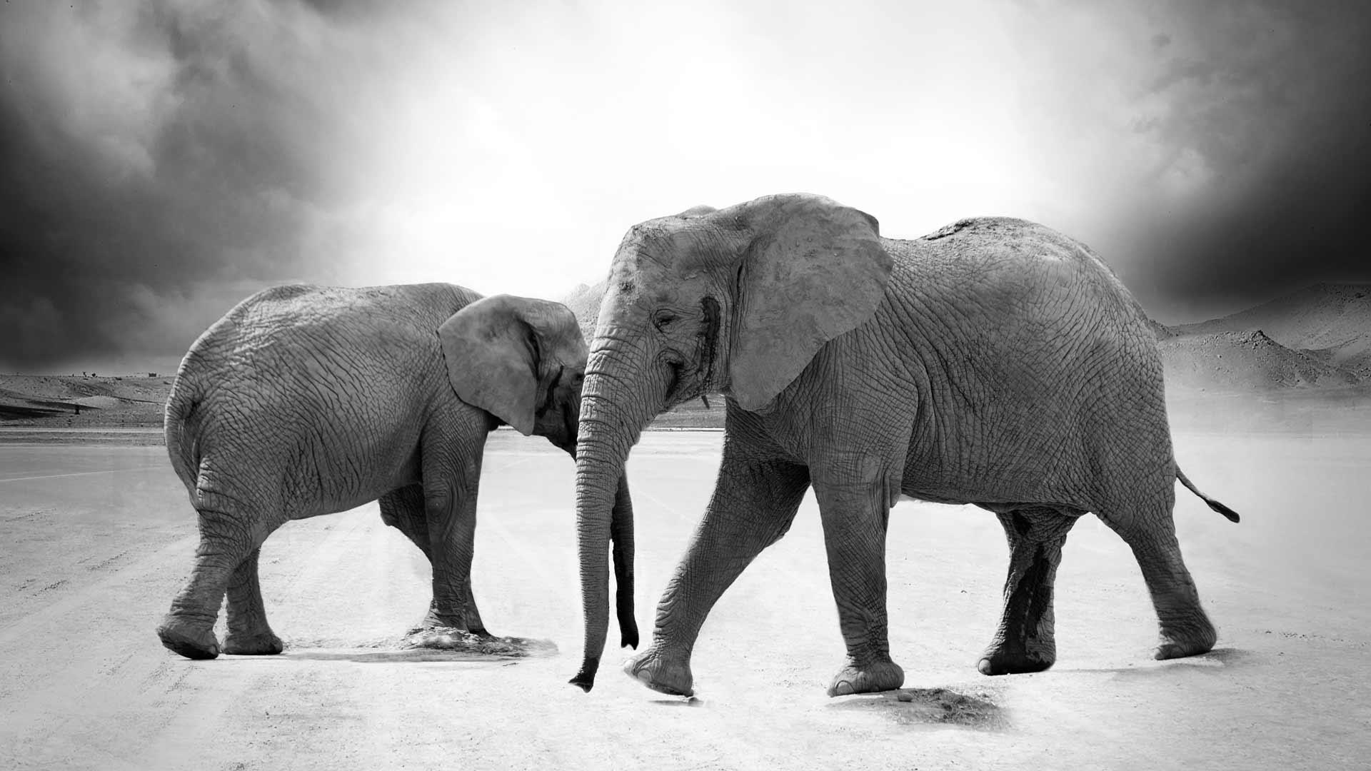 Warum ein Zirkuselefant nicht wegläuft